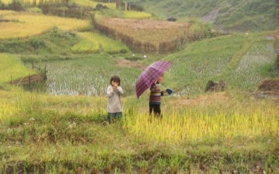 Vacances en famille au Vietnam : comment réussir son séjour ?